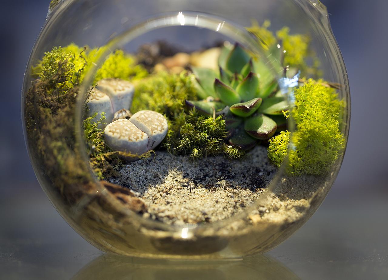 Экосистемы своими руками